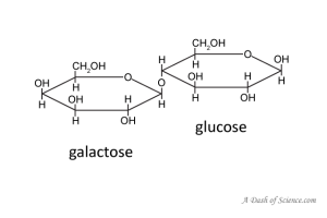 Lactose on A Dash of Science.com