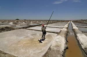 man working at salt evaporation pond in Tamil Nadu, India A Dash of Science.com