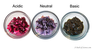 colored cabbage on A Dash of Science.com