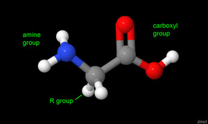 The amino acid glycine on A Dash of Science.com