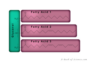 triglyceride diagram from A Dash of Science.com